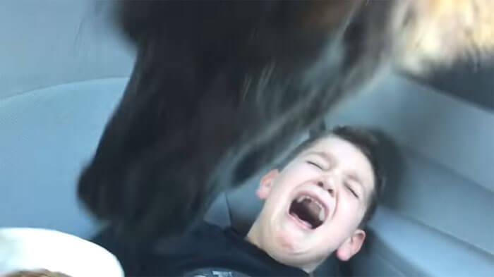 лама напугала мальчика