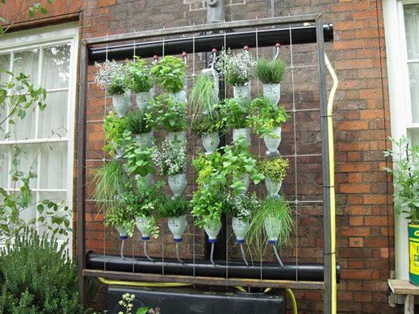 пластиковый висячий сад