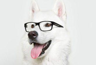 различают ли цвета собаки