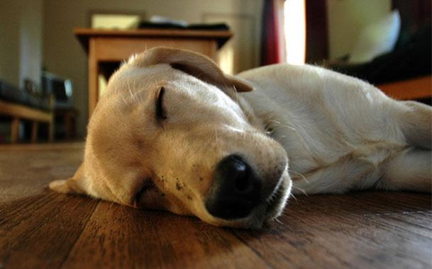 что снится собаке